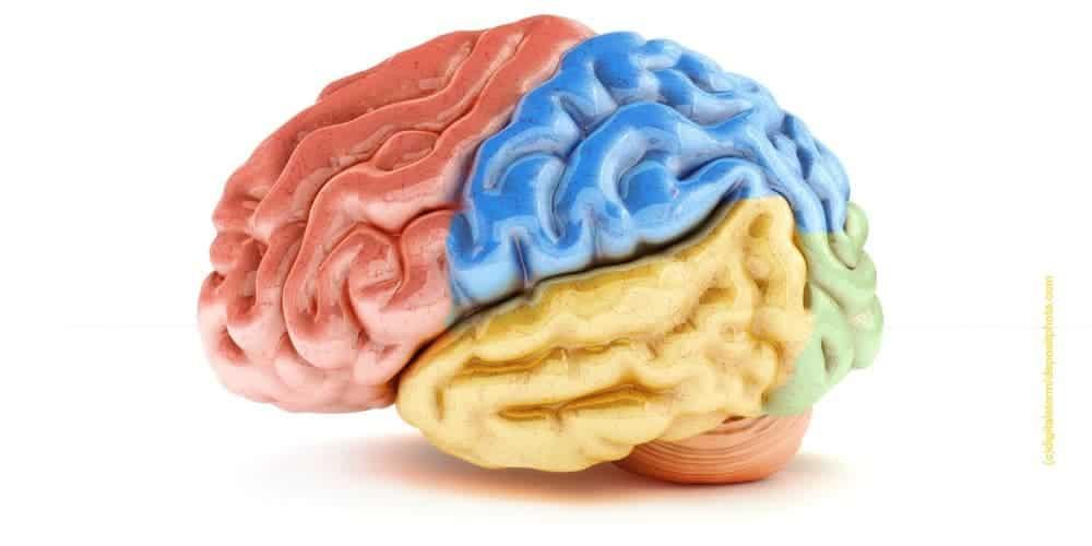 Hirnforschung Erziehung Hirnstruktur Einfluss